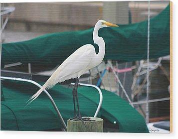White Egret Wood Print by Debra Forand