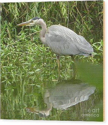 Wood Print featuring the photograph White Egret Double  by Susan Garren