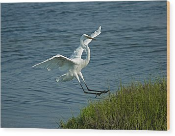 White Egret Landing 2 Wood Print by Ernie Echols