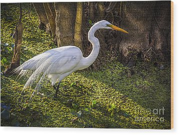 White Egret On The Hunt Wood Print by Marvin Spates