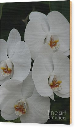 Wood Print featuring the photograph White Elegance by Mary Lou Chmura