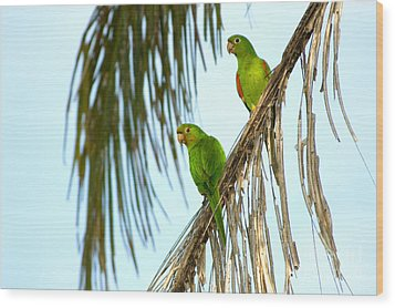 White-eyed Parakeets, Brazil Wood Print by Gregory G. Dimijian, M.D.
