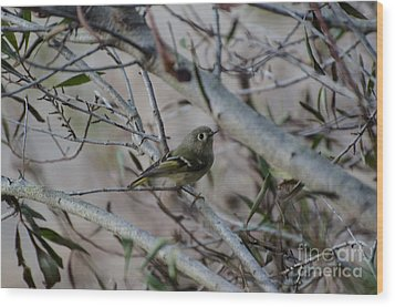 White-eyed Vireo Wood Print by Donna Brown