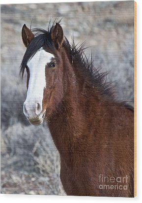 White-faced Mustang In December V Wood Print by Vinnie Oakes