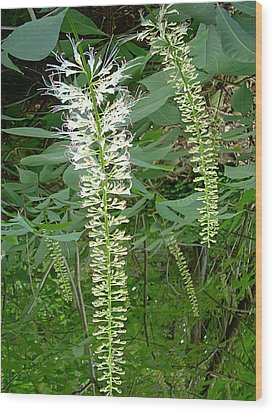 White Fern Wood Print by Aimee L Maher Photography and Art Visit ALMGallerydotcom