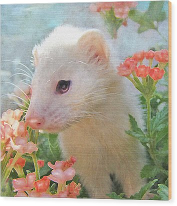 White Ferret Wood Print by Jane Schnetlage