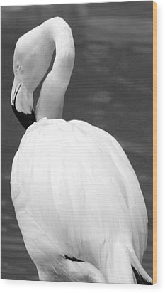 White Flamingo Wood Print by Jp Grace