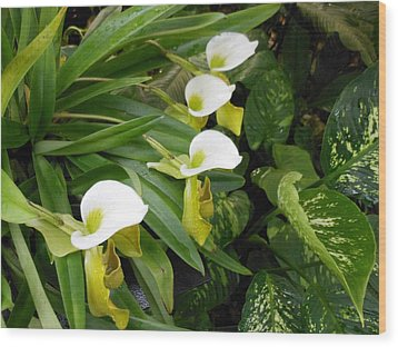 White Flower Array Wood Print by Kay Gilley