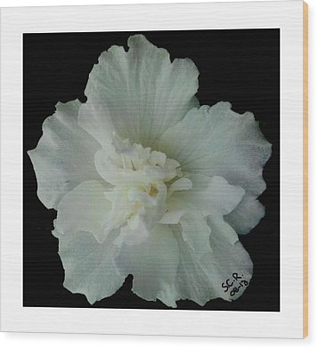 White Flower By Saribelle Rodriguez Wood Print by Saribelle Rodriguez