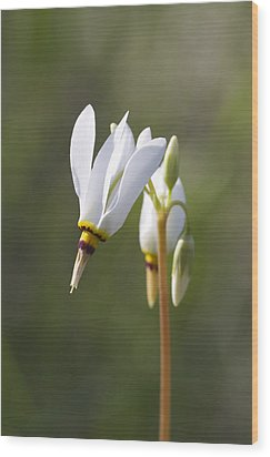 White Flower Wood Print by David Tennis