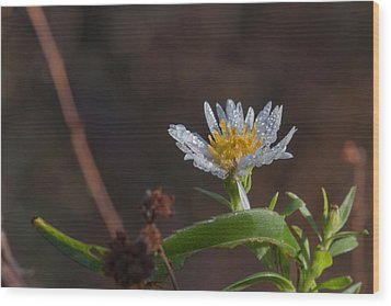 Wood Print featuring the photograph White Flower Dew-drops Autumn by Jivko Nakev