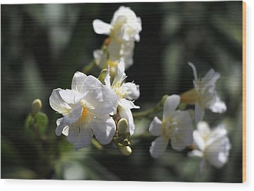 Wood Print featuring the photograph White Flower - Early Spring Time by Ramabhadran Thirupattur