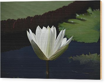 Wood Print featuring the photograph White Flower Growing Out Of Lily Pond by Jennifer Ancker