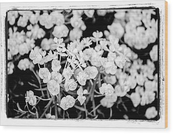 Wood Print featuring the photograph White Flowers  by Craig Perry-Ollila