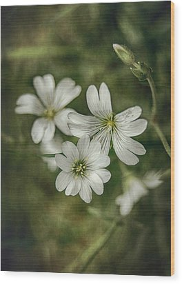 White Flowers Wood Print by Gynt