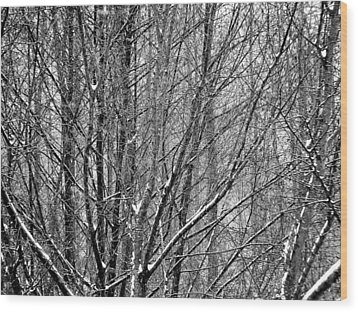 White Forest Wood Print by Marc Philippe Joly