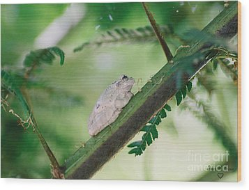 Wood Print featuring the photograph White Frog by Donna Brown