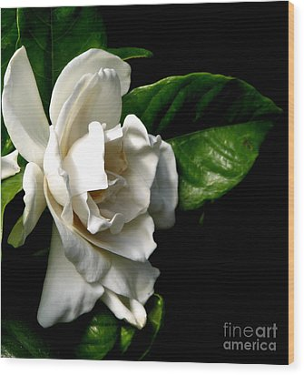 Wood Print featuring the photograph White Gardenia by Rose Santuci-Sofranko