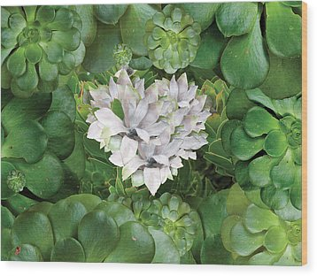 White Green Flower Wood Print by Alixandra Mullins