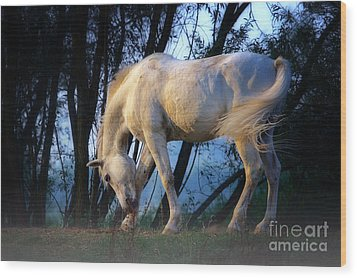 Wood Print featuring the photograph White Horse In The Early Evening Mist by Nick  Biemans