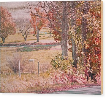 White Horse With Orange And Green Autumn Colors Wood Print