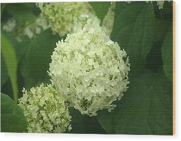 Wood Print featuring the photograph White Hydrangea Blossoms by Suzanne Powers