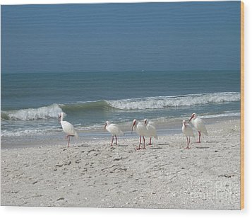 White Ibis In Naples Florida Wood Print