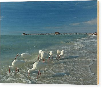 White Ibis Near Historic Naples Pier Wood Print