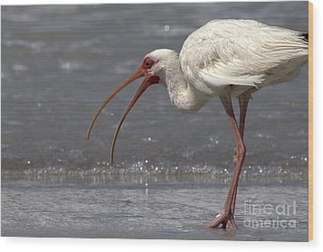 Wood Print featuring the photograph White Ibis On The Beach by Meg Rousher
