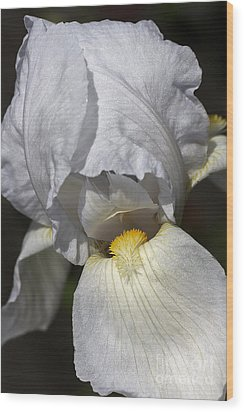 Wood Print featuring the photograph White Iris by Joy Watson