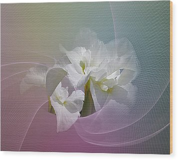 Wood Print featuring the photograph White Iris by Judy  Johnson