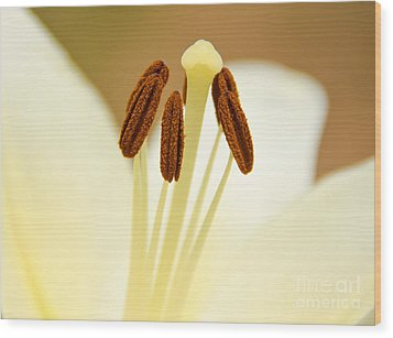 Wood Print featuring the photograph White Lily #2 by Lisa L Silva