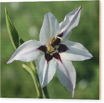 Wood Print featuring the photograph White Lily - A Beauty by Ellen Tully