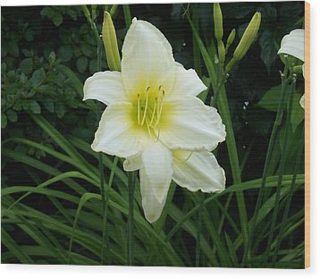 White Lily Wood Print by Catherine Gagne