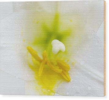 White Lily Closeup Wood Print