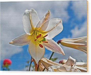 White Lily Flower Against Blue Sky Art Prints Wood Print by Valerie Garner