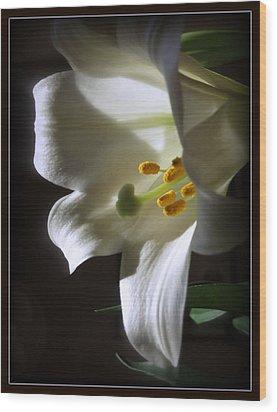 White Lily Wood Print by Kay Novy