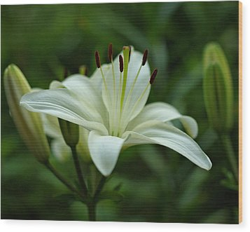 White Lily Wood Print by Sandy Keeton