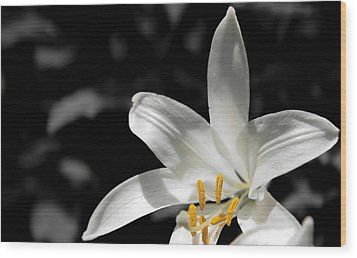 White Lily With Yellow Stamens Against Dark Background Wood Print