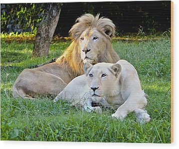 White Lion And Lioness Wood Print by Venetia Featherstone-Witty
