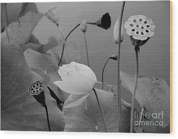 White Lotus Flowers In Balboa Park San Diego Wood Print by Julia Hiebaum
