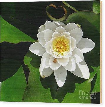 White Lotus Heart Leaf  Wood Print by Nora Boghossian
