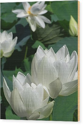 White Lotus Wood Print by Larry Knipfing
