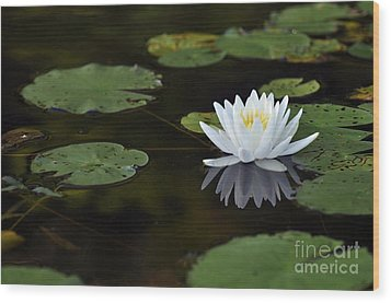 Wood Print featuring the photograph White Lotus Lily Flower And Lily Pad by Glenn Gordon