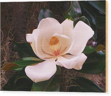 Wood Print featuring the photograph White Magnolia by Yolanda Rodriguez