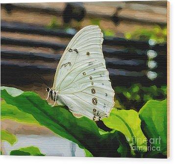 White Morpho Wood Print by Jon Burch Photography