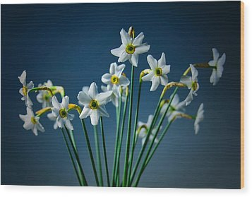 White Narcissus On A Dark Blue Background Wood Print
