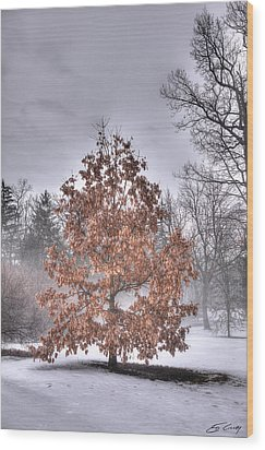 White Oak In Fog Wood Print