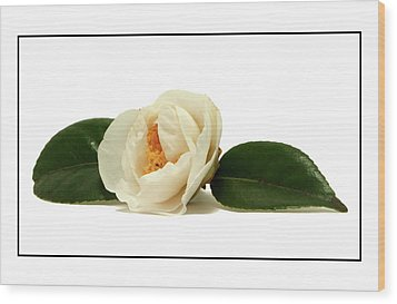 White On White Wood Print by Ron Roberts