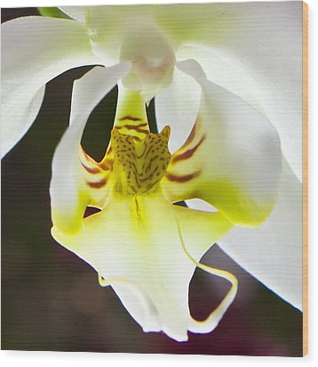 White Orchid Close 2 Wood Print by Timothy Blair